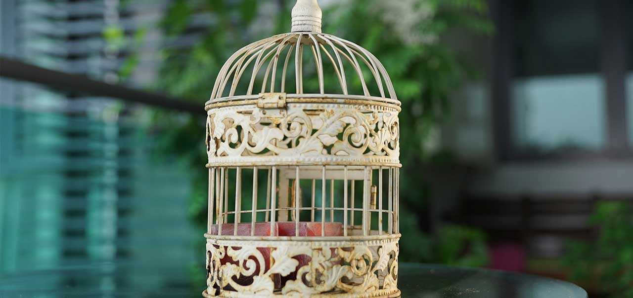 i know why the caged bird sings graduation